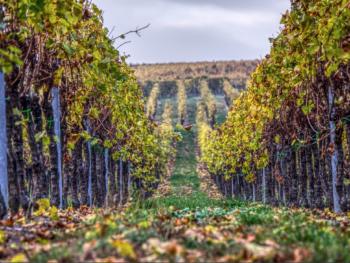 Best Wines around the World 1
