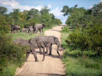 Amazing Safari in S. Africa